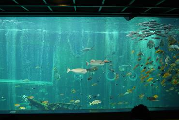 水族館.jpg