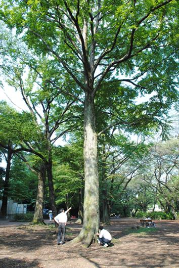 樹の恩恵を考える