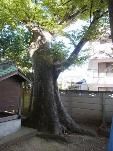 「大きな樹の下で」