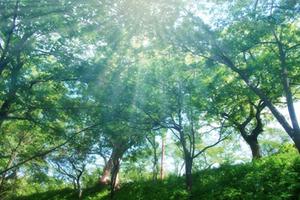 木材資源の枯渇