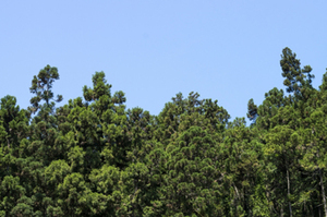 白木から見る日本人の美意識