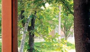 木の好みと文化の歴史を知る