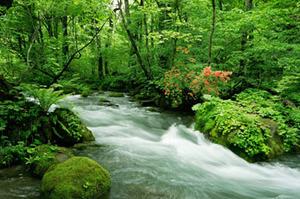 渓流 森林
