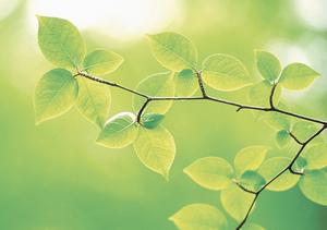 新緑 葉っぱ