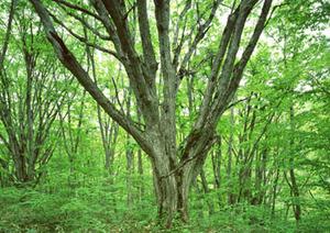 常緑樹と落葉樹