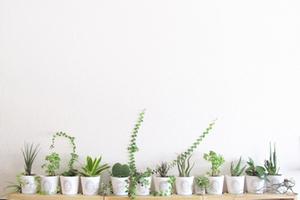 センス良く観葉植物を置くために