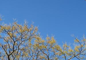 立ち木 木 樹木 無垢材