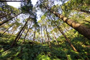 日本 森林