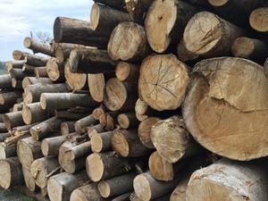 切り出した原木 無垢材家具
