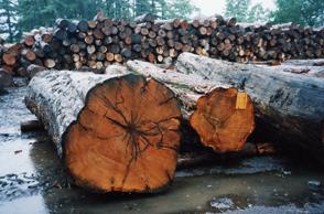 2.原木からの買い付け