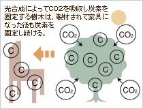 木は炭素の貯蔵庫