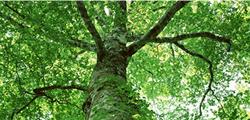 森の恵みとの出会い