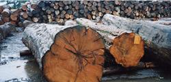 良質の原木探しから始まる