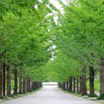 日本人と木のつながり
