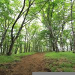 針葉樹文化と広葉樹文化の違い