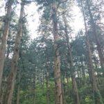 林業の今 その2