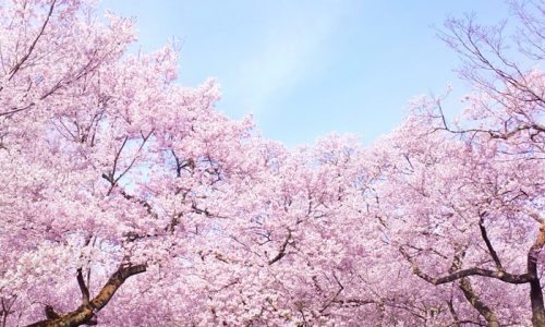 「木の深イイ話」-日本人のサクラへの思い-