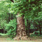 木の文化と使用方法(古代~現代)