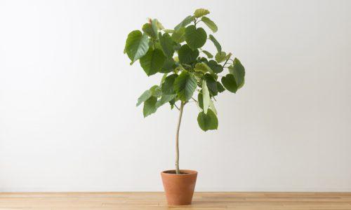 「小さな」観葉植物、お勧めは?