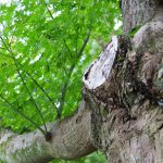 日本人と木の文化について その2