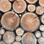 年輪に現れる木の生き様を知る